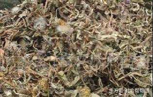 清热解毒的草药图片 有清热解毒的中草药