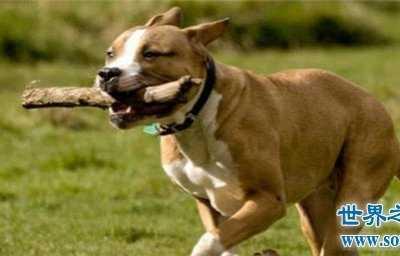 梦见被狗咬是什么意思 周公解梦梦到自己被狗咬是什么意思