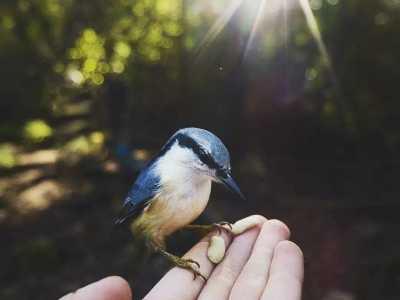 芬兰代表动物 会动物语言的芬兰帅哥和童话森林里的小秘密