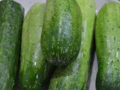 6月份适合种植什么蔬 6月份适合种什么蔬菜