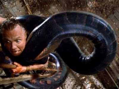 蟒蛇蜕变成美女的电影 关于蟒蛇的电影大盘点